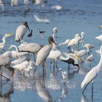 Wading Bird Extravaganza