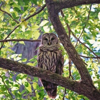 Owl in the Forest