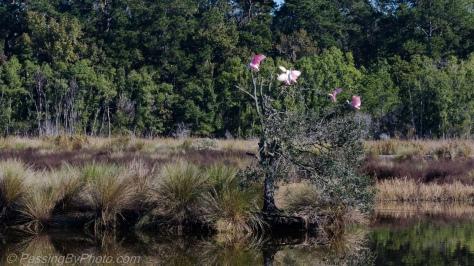 Spoonie Tree