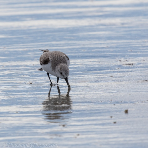 Small Shore Bird