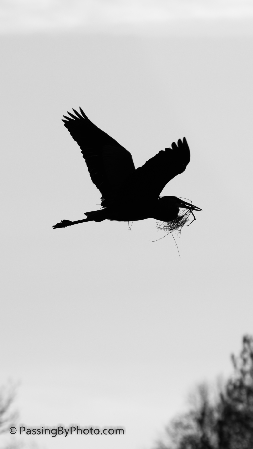 Great Blue Heron Flying Silhouette