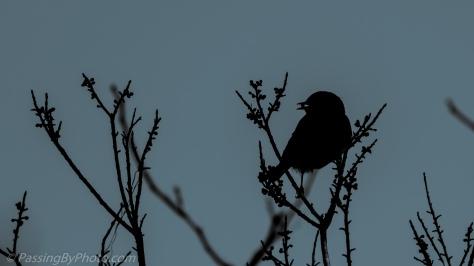 Songbird Silhouette