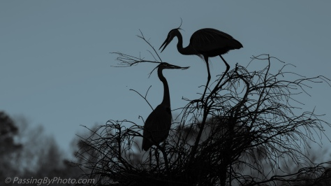 Great Blue Heron Pair Stick Ritual