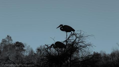 Great Blue Heron Pair Stick Ritual