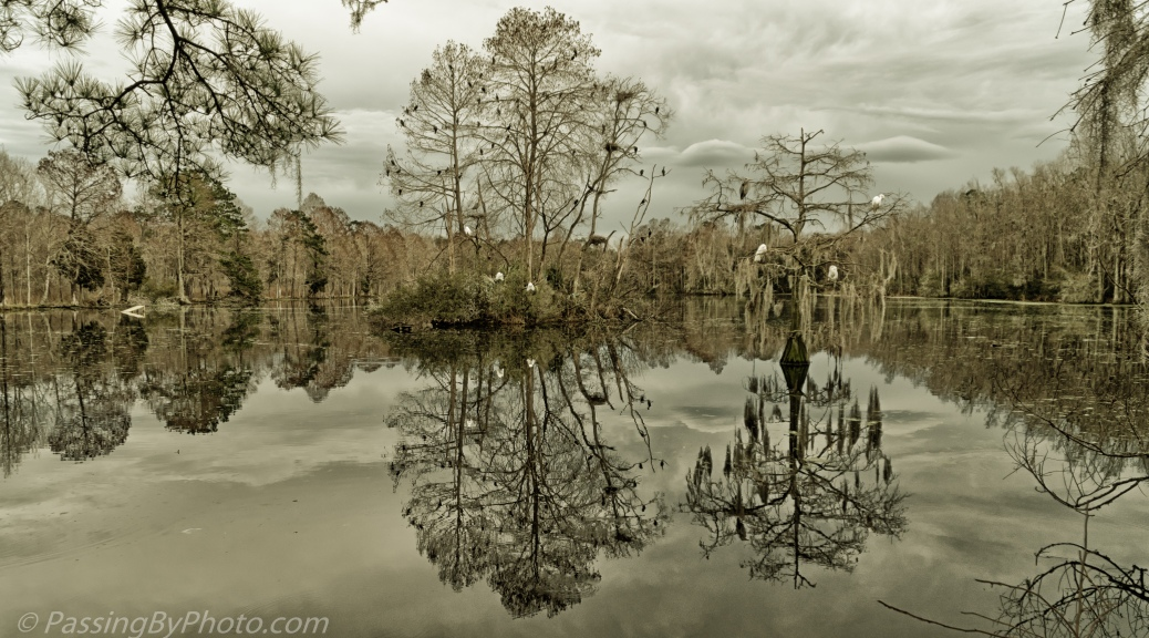Trees and Pond Reflections