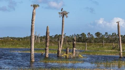 Vierra Wetlands