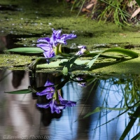 Iris Reflection