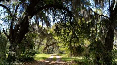Path Under the Live Oaks