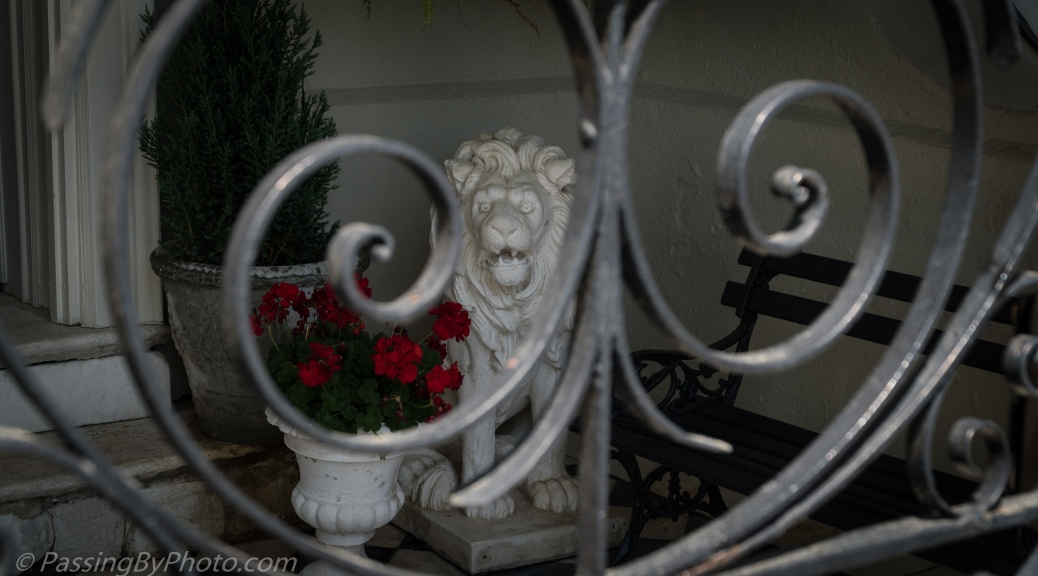 Lion Guarding Red Geraniums