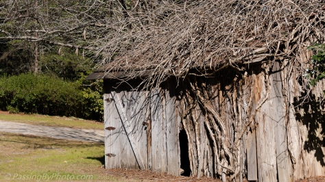 Old Shed in February