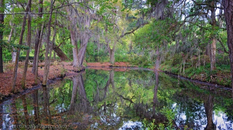 Pond at Magnolia Plantation