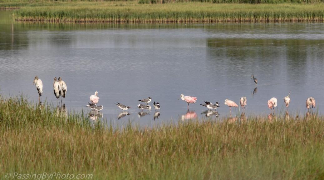 Wading Bird Lineup