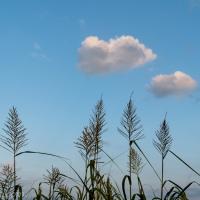 Pesky Reeds