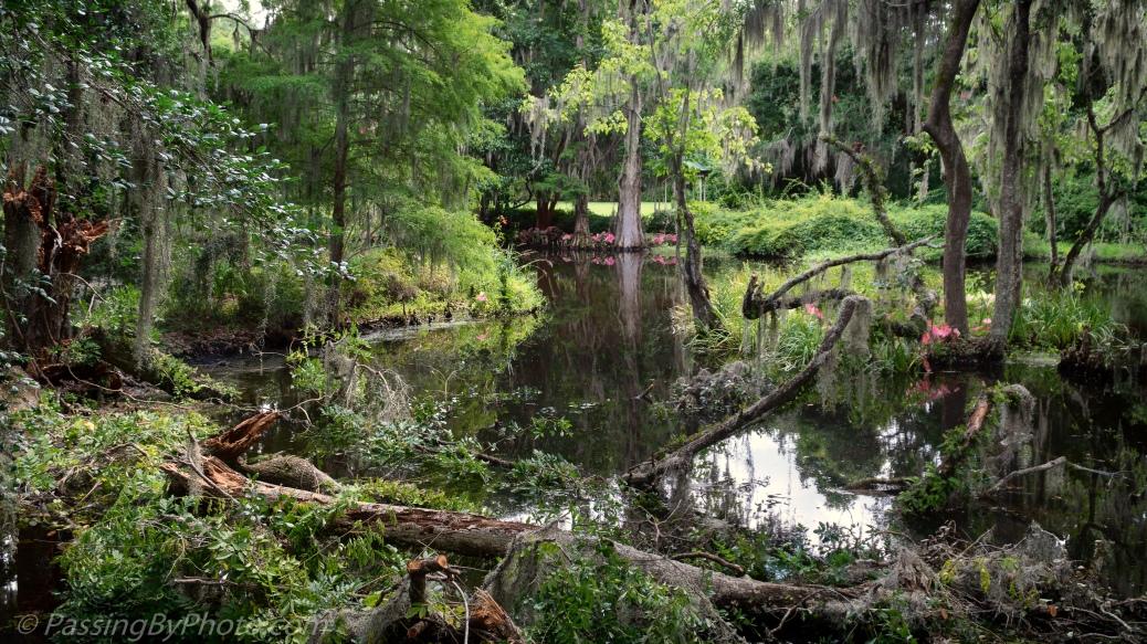 Pond at Magnolia Plantation