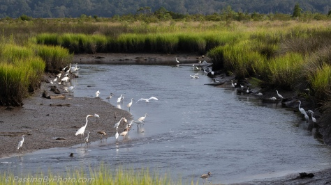 Wading Birds Lining the Shore