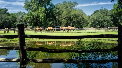 Horses at Middleton Place