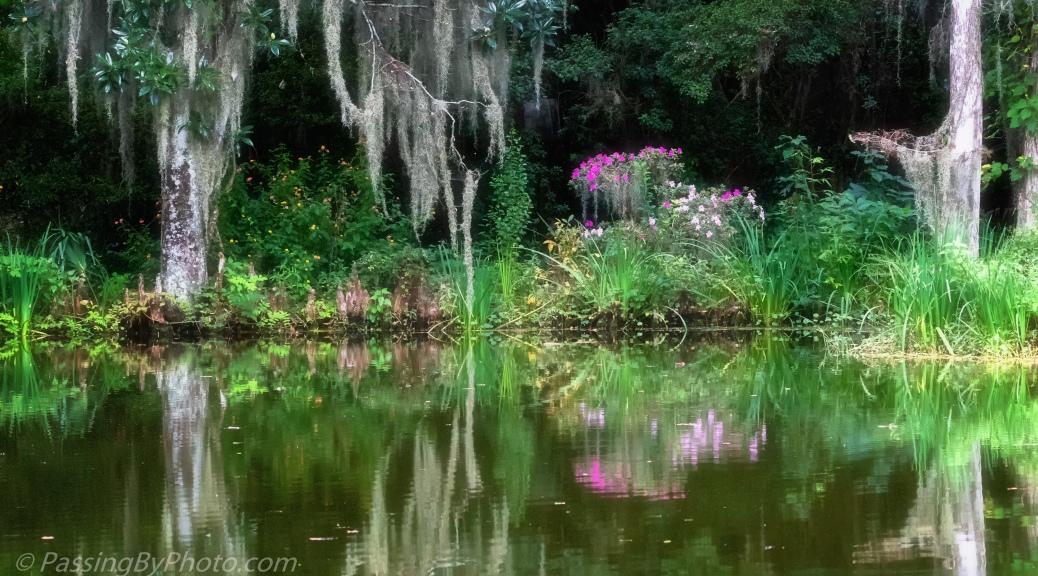 Pond at Magnolia Plantation and Gardens