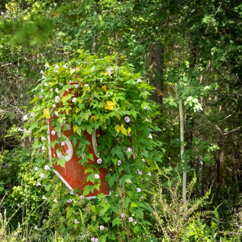 Stop Sign Covered with Morning Glories