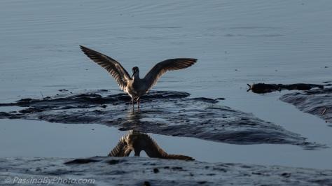 Shore Bird Landing