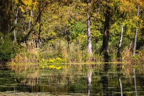 Fall Pond with Sunflowers