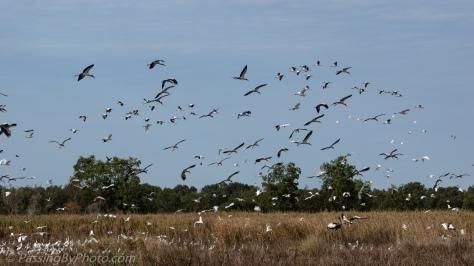 Wading Bird Frenzy Takes Flight