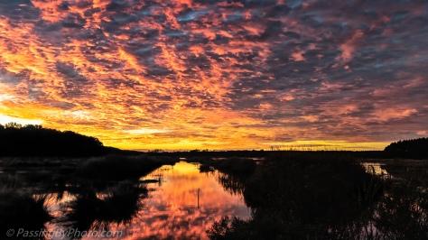 Sunrise over ACE Basin