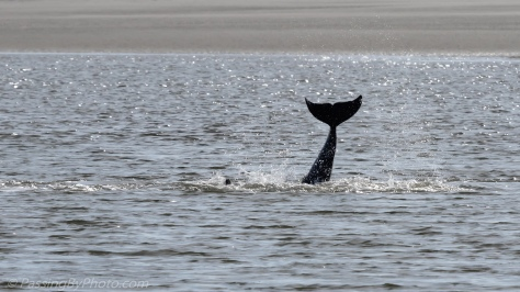 Dolphin Tail