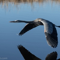 GBH: Close Fly By