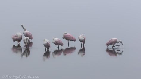 Spoonbills Standing Around