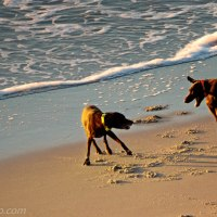 Beach, Dog Fun
