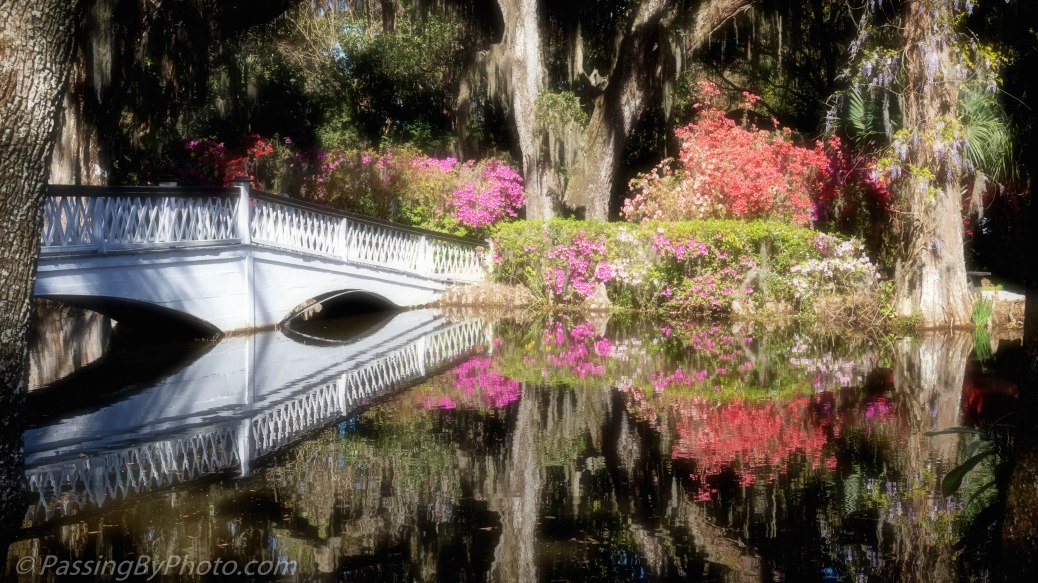 Long White Bridge and Azaleas