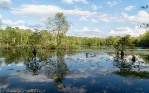 Ravenswood Pond, White Puffy Clouds