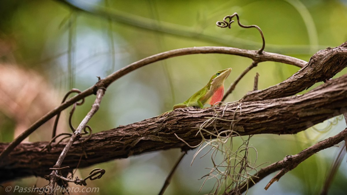 Carolina Anole in Fanciful Jungle