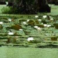 Cypress Gardens: First Visit