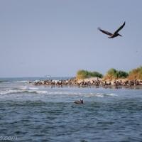 Bird Rookery