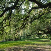 Pause Under the Live Oaks