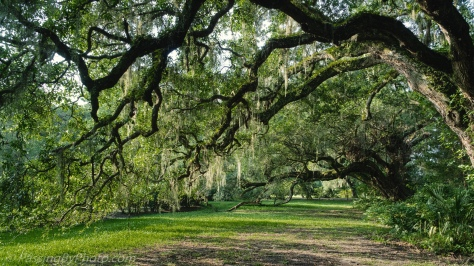 Under the Spreading Live Oak Trees