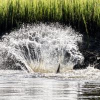 Dolphin Splash, Take 2