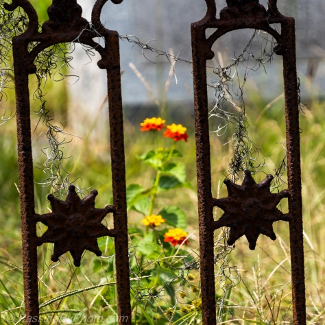Flowers Through Fence