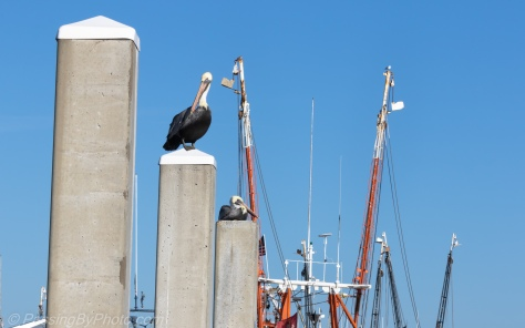 Pelicans Perched on Pilings, Shrimp Boat Rigging