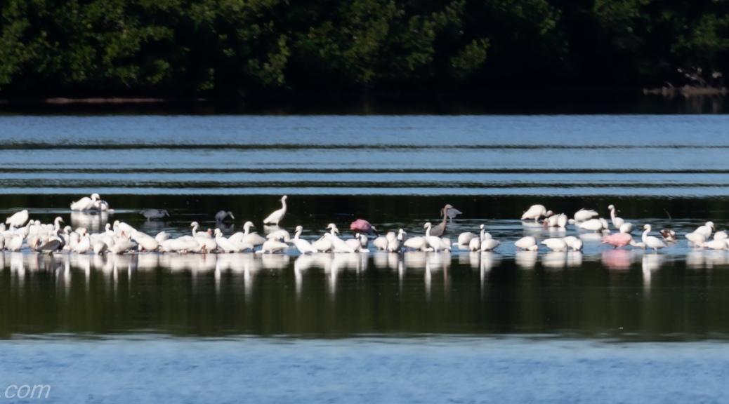 Wading Birds on Sandbar
