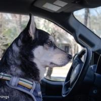 Oliver, Truck Companion