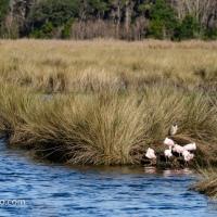 Sunning by the Marsh Grass