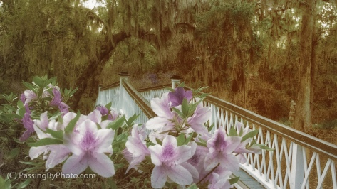 Azaleas in Front of Bridge
