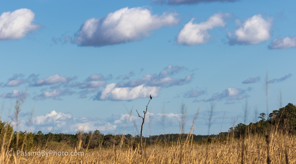 Fluffy White Clouds and Perched Cormorant