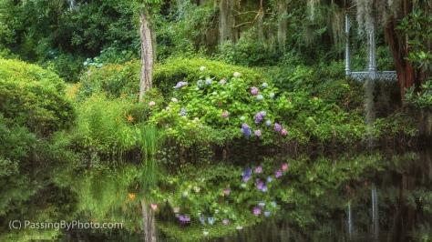 Hydrangea, Reflections and Gazebo