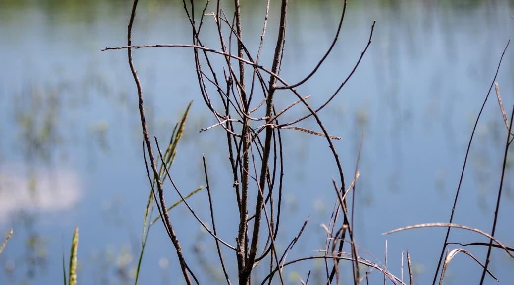 Twig Symbol