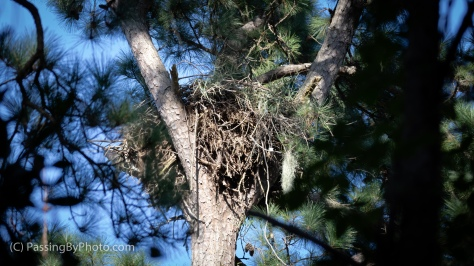 Eagle's Nest, Resting