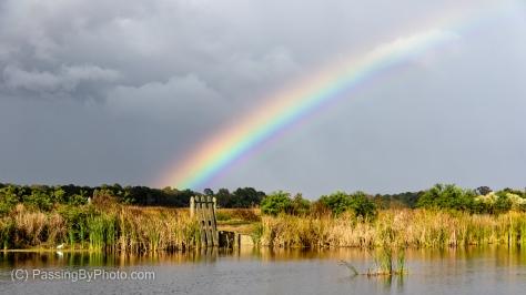 Rainbow From Magnolia Rice Pond