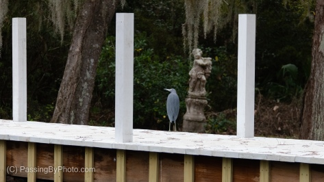 Little Blue Heron and Cherub
